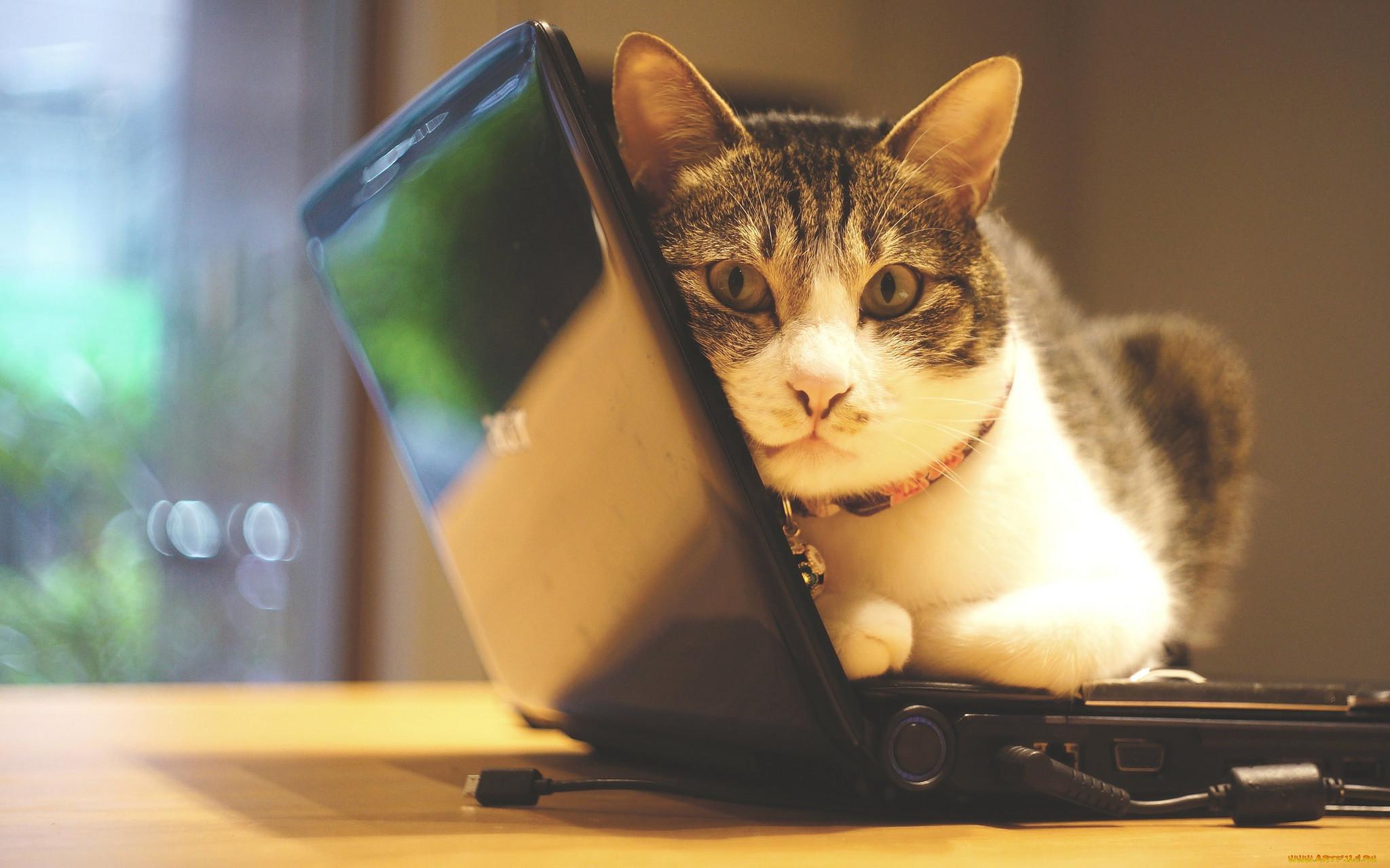 картинки компьютер и животные вот